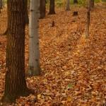 Jesień w lesie na Pańskiej Górze