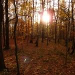 Jesień na Pańskiej Górze