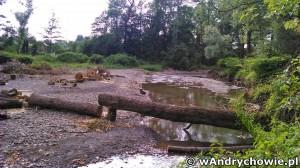 Porządkowanie koryta Wieprzówki po powodzi w maju 2014r. - Andrychów, ul. Olszyny