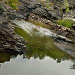 Wieprzówka rzeką roku 2013